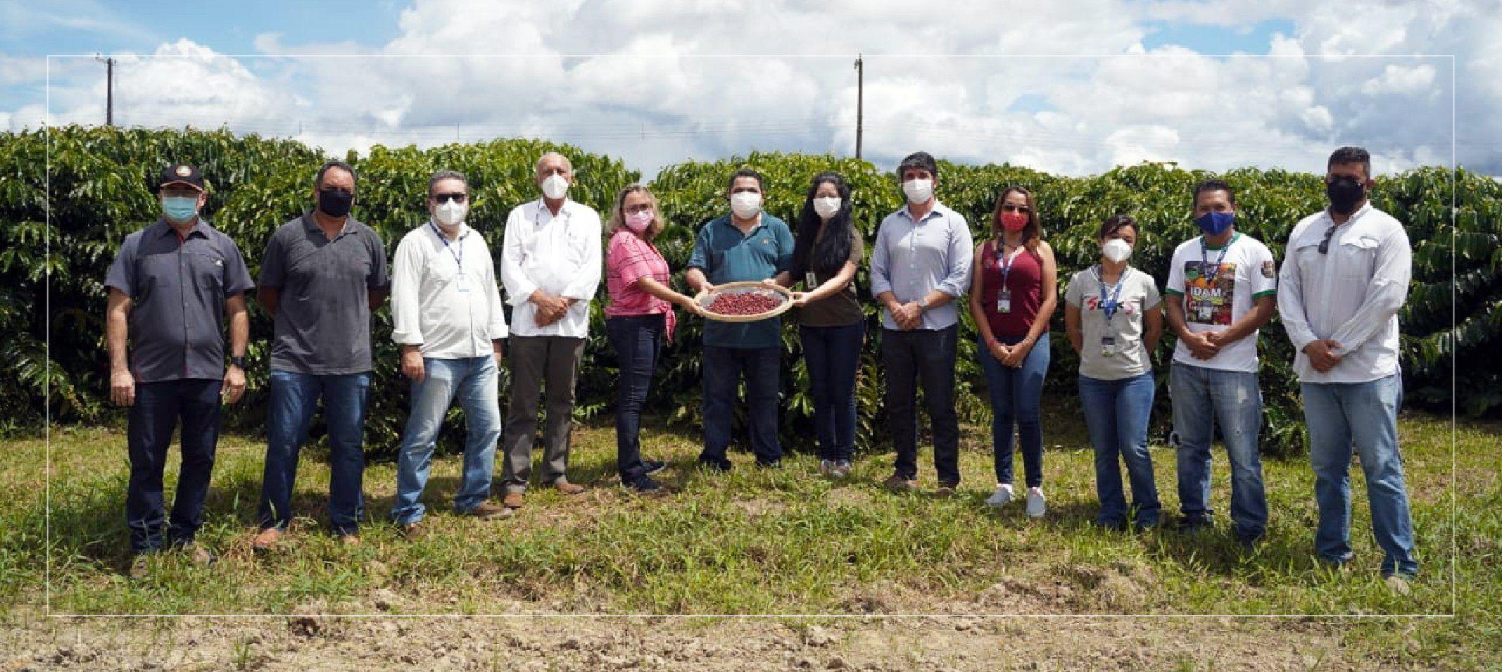 Primeira colheita de café da Fazenda Experimental da Ufam é celebrada em campo